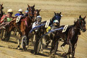 cavallo sportivo