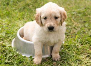 puppy-1207816_1280 (1)