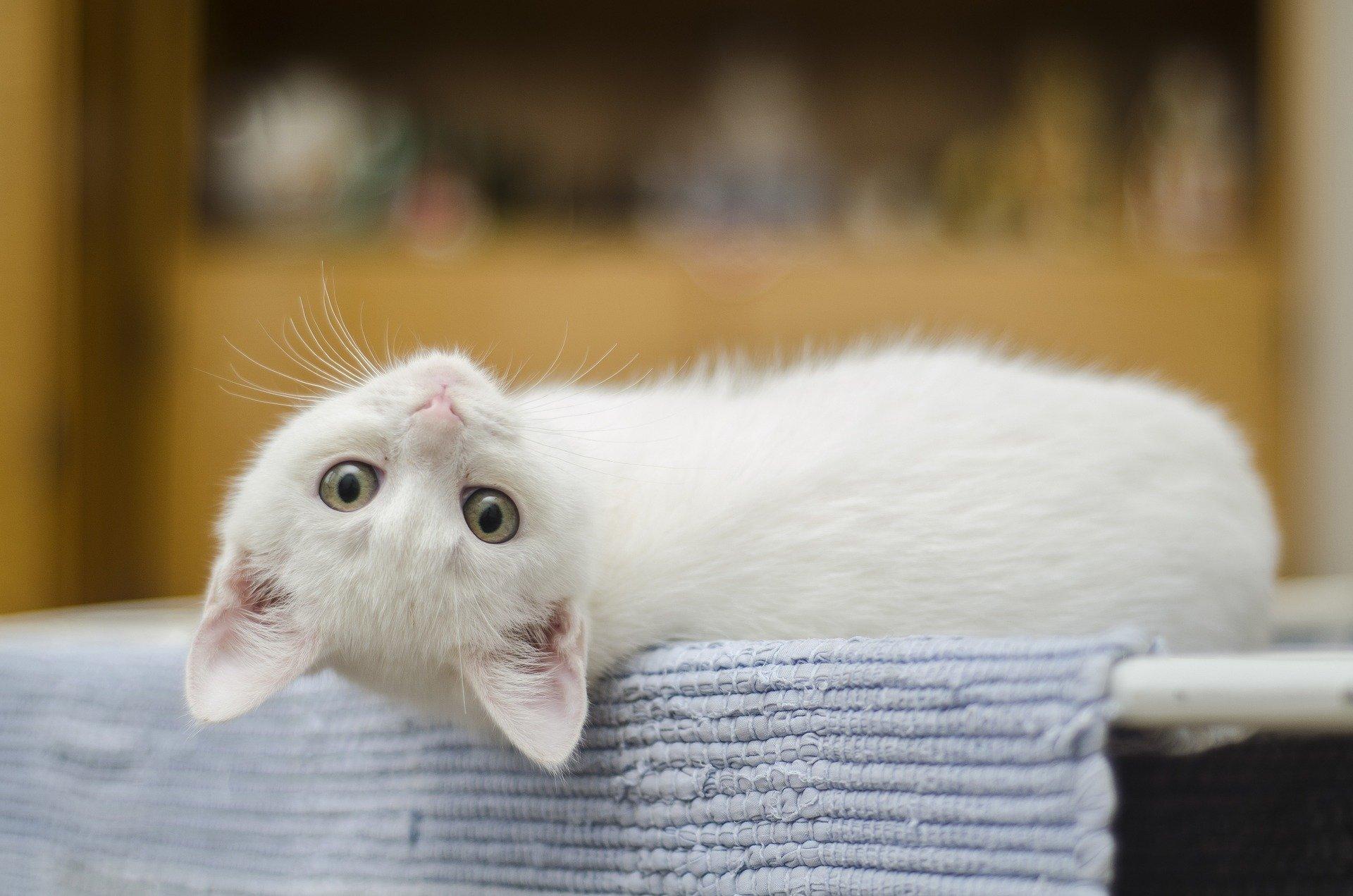 kitten-1285341_1920