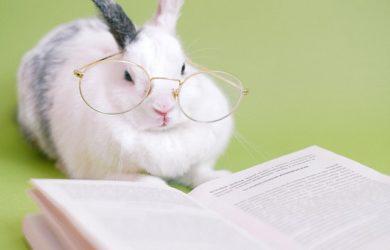 Come si tiene un coniglio in casa