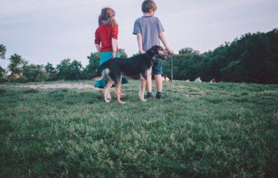 creare un rapporto di fiducia con il cane