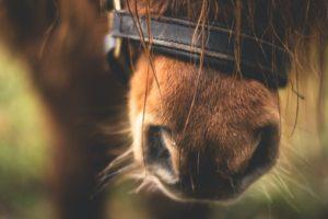 perché spazzolare il cavallo
